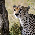 Bryllupsreise i Tanzania 3