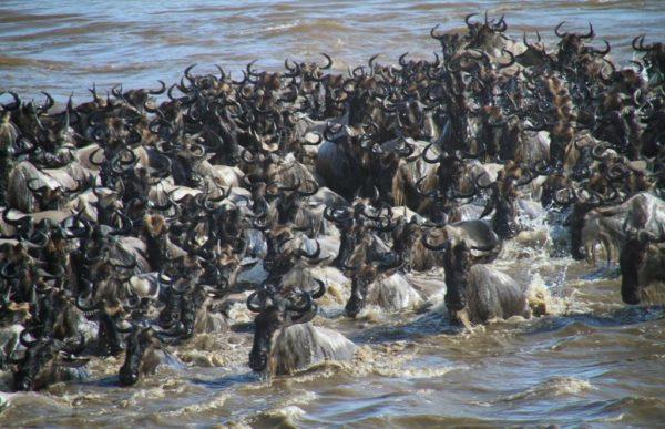 Den store vandringen Mara 2