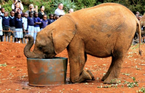 Elefantbarnehjemmet 3