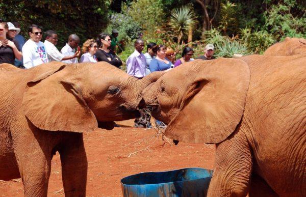 Elefantbarnehjemmet 5
