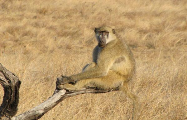 Hwange nasjonalpark 6