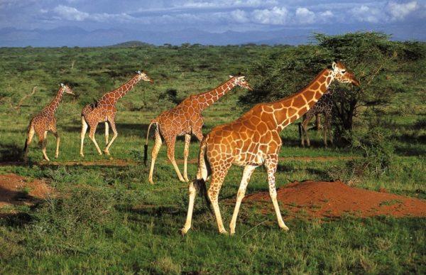 Reiser til Kenya, Reiser til Tanzania