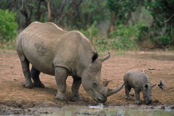 Lake Naivasha og safari i Masai Mara 3