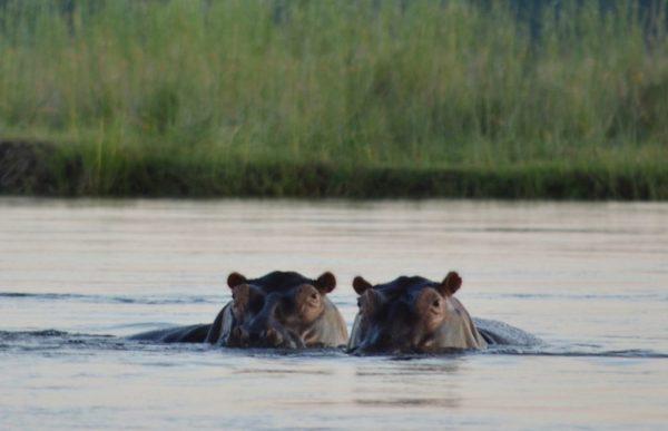 Magisk reise på Zambezi 2