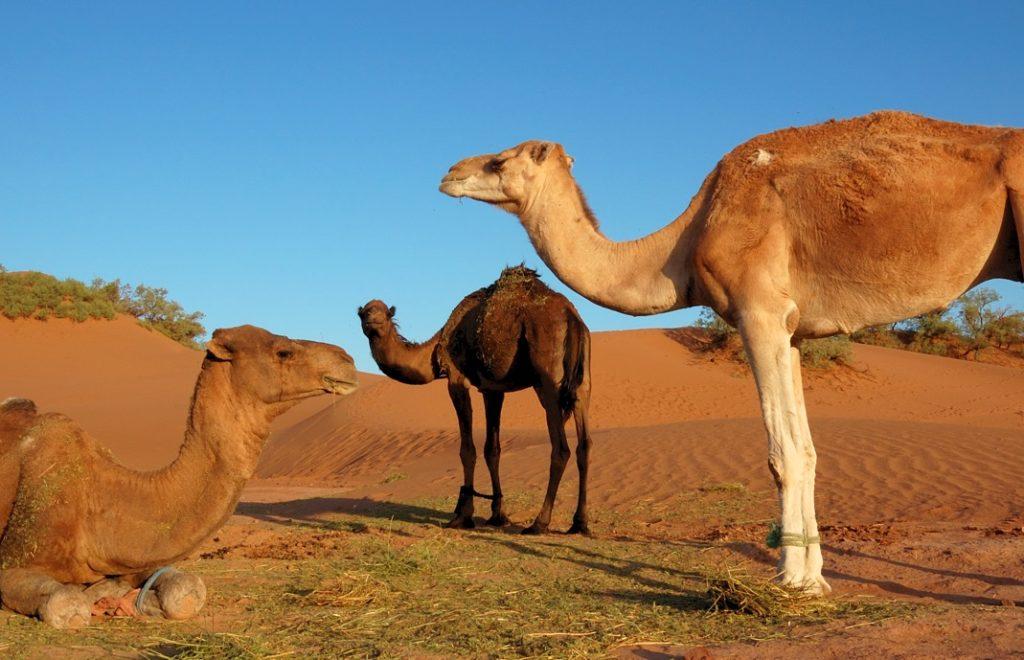 Marokko 3