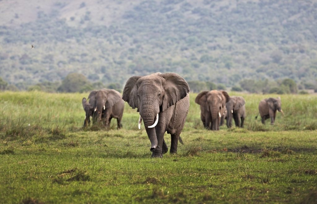 A herd of elephant on Kilala Plain