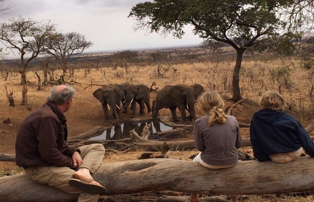 Tanzania Tarangire-olifanten