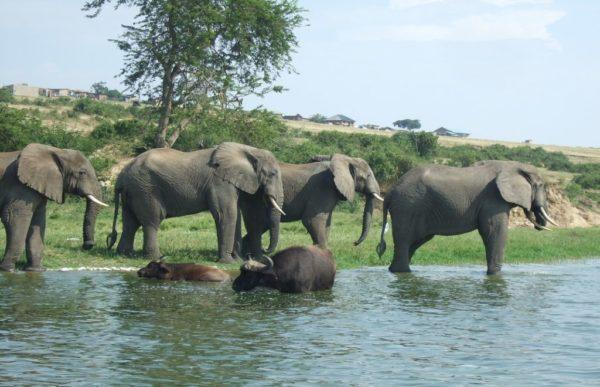Uganda – Afrikas Perle 1