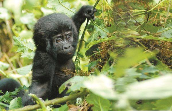 Uganda – Afrikas Perle 2