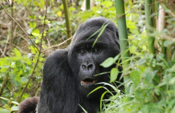 Reiser til Uganda