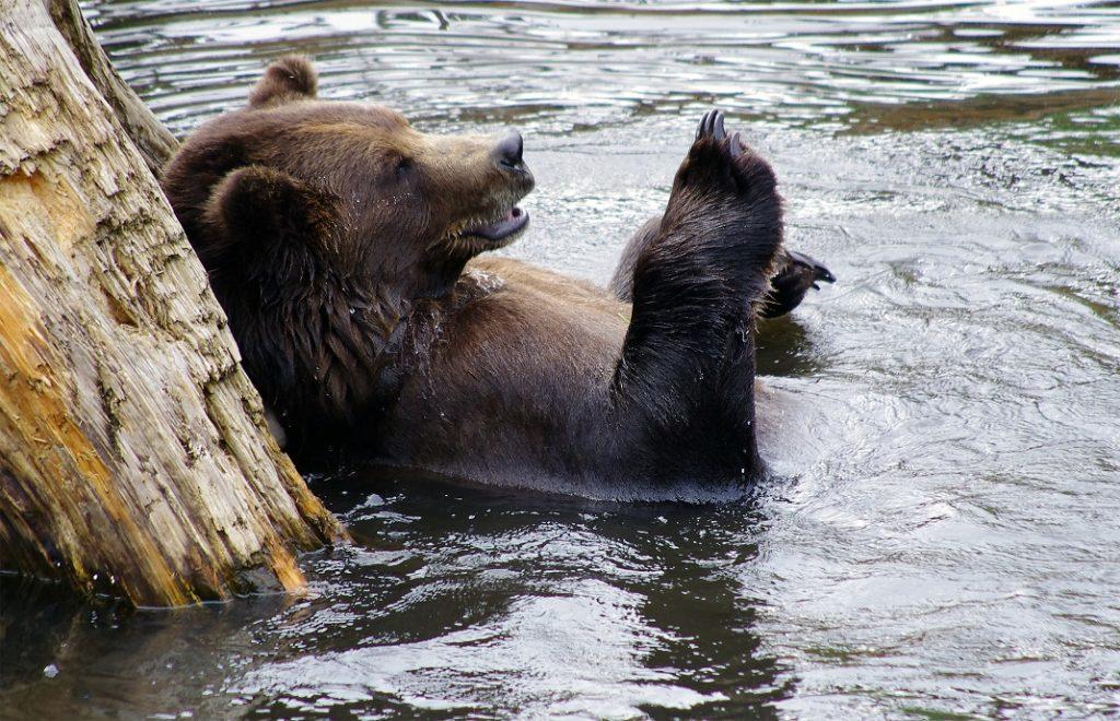 Reiser til Alaska