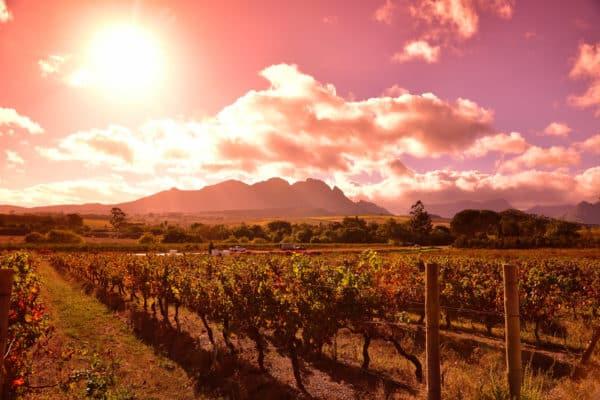 Cape Town, Vinland og hvithai 3