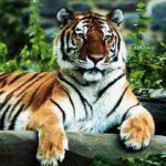 Chitwan nasjonalpark 2