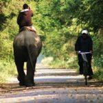 Chitwan nasjonalpark 5