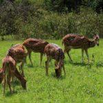 Chitwan nasjonalpark 6