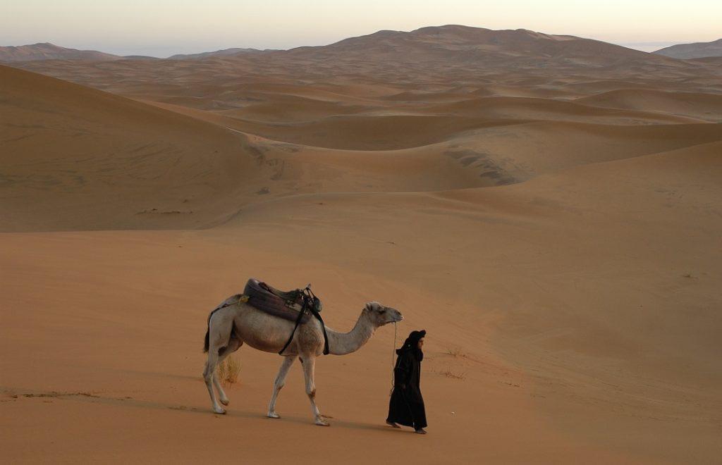 Kamelsafari i Sahara 2