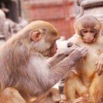 Rundreise i Nepal 5