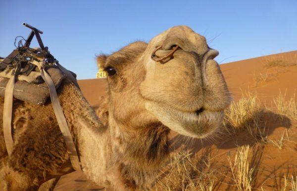 Reiser til Marokko
