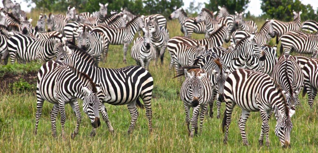 Masai Mara Nasjonalpark