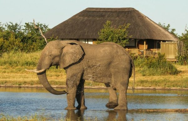nehimba---all-the-rooms-overlook-the-lodge-waterhole