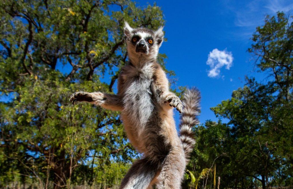 Madagaskar_3