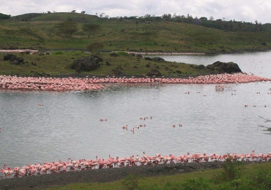 Arusha nasjonalpark 3