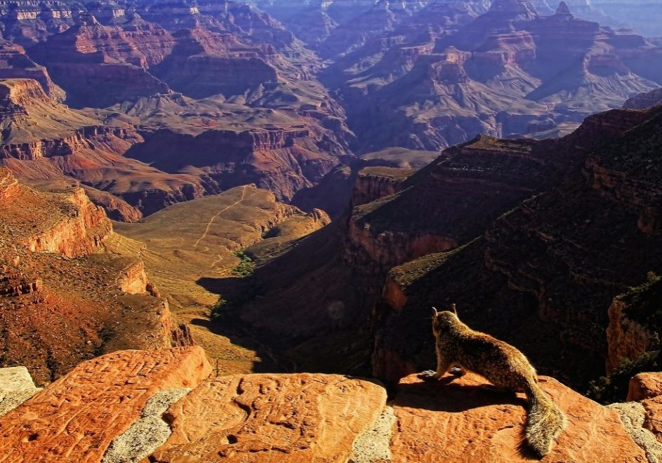 Grand Canyon nasjonalpark 6