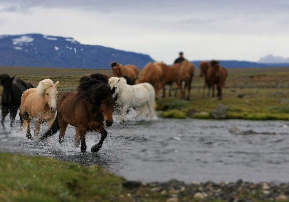 I tølt på Island 4