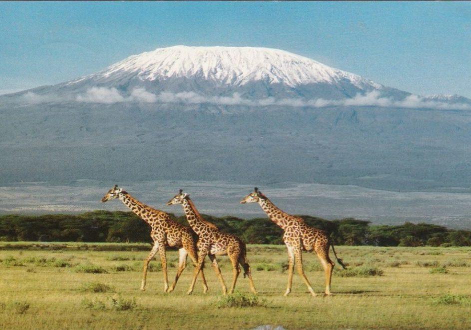 Kilimanjaro 4