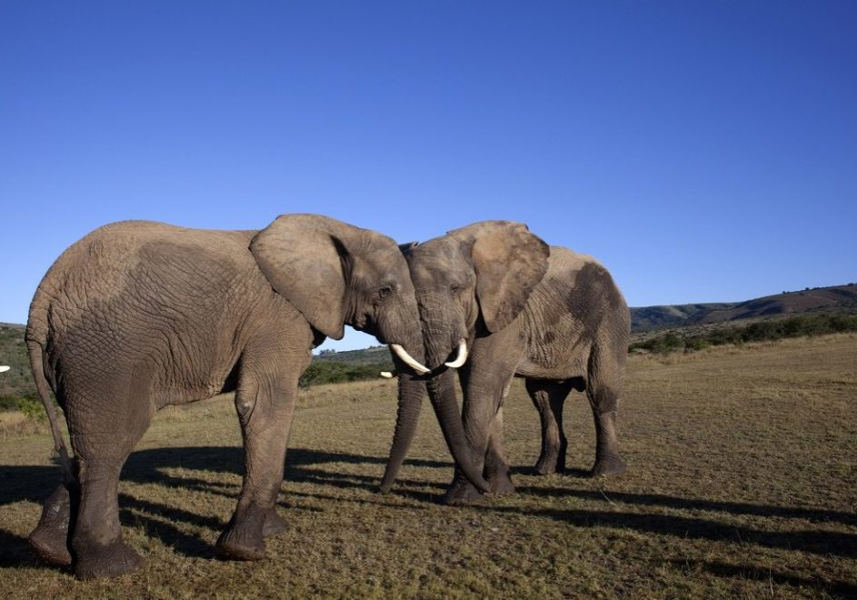 Kruger nasjonalpark 4