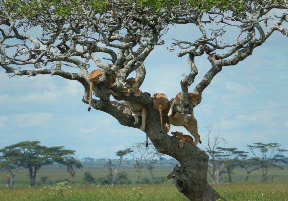 Lake Manyara nasjonalpark 2