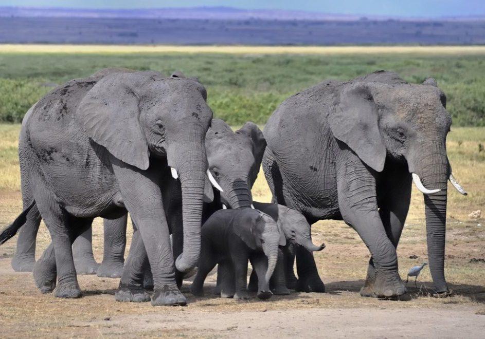 Lilongwe Wildlife Trust 1
