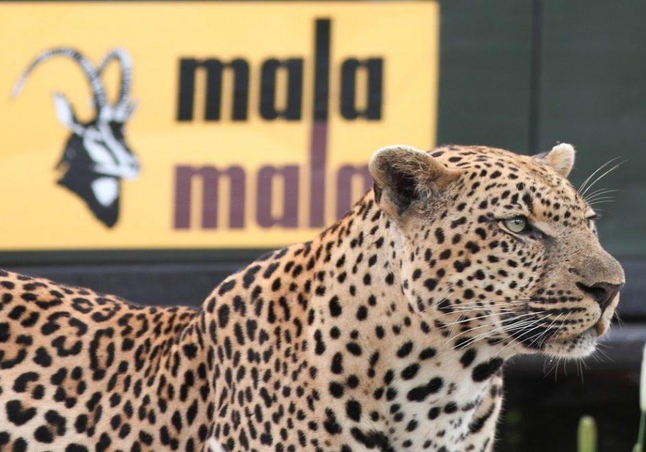MalaMala Game Reserve 1