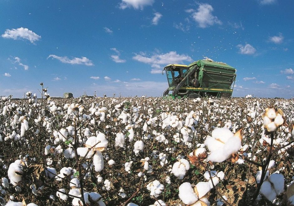 Greenwood: Cotton