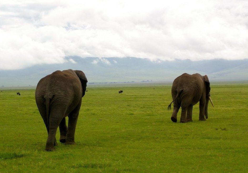 Ngorongoro-krateret 1