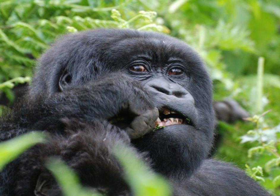 Rwanda 6
