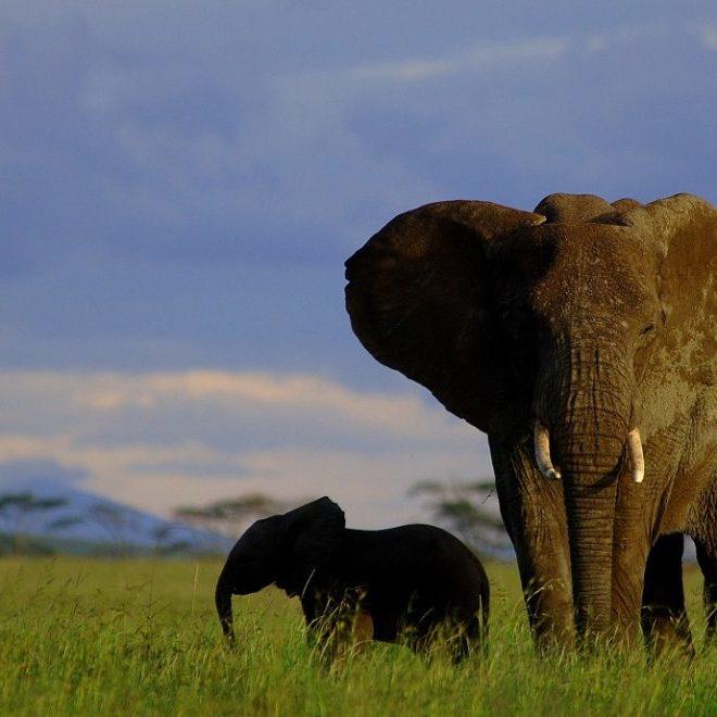 Serengeti nasjonalpark 3