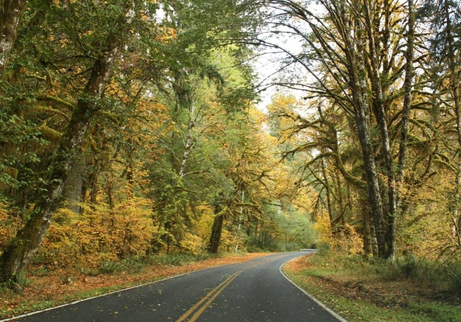 Olympic National Park - Driving into the Hoh Rain Forest (1 hour south of Forks, WA)