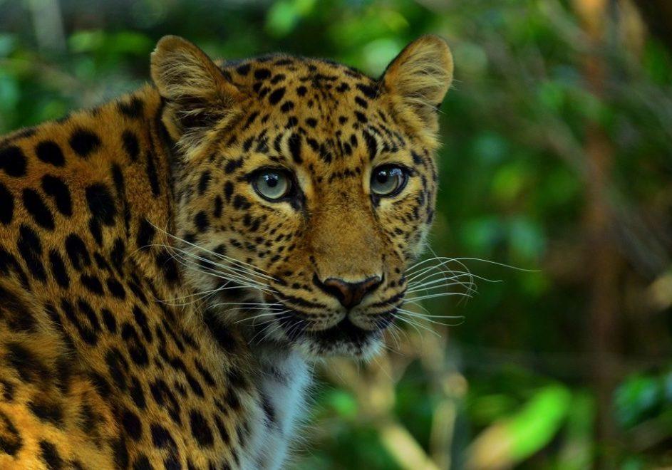 Yala nasjonalpark 2